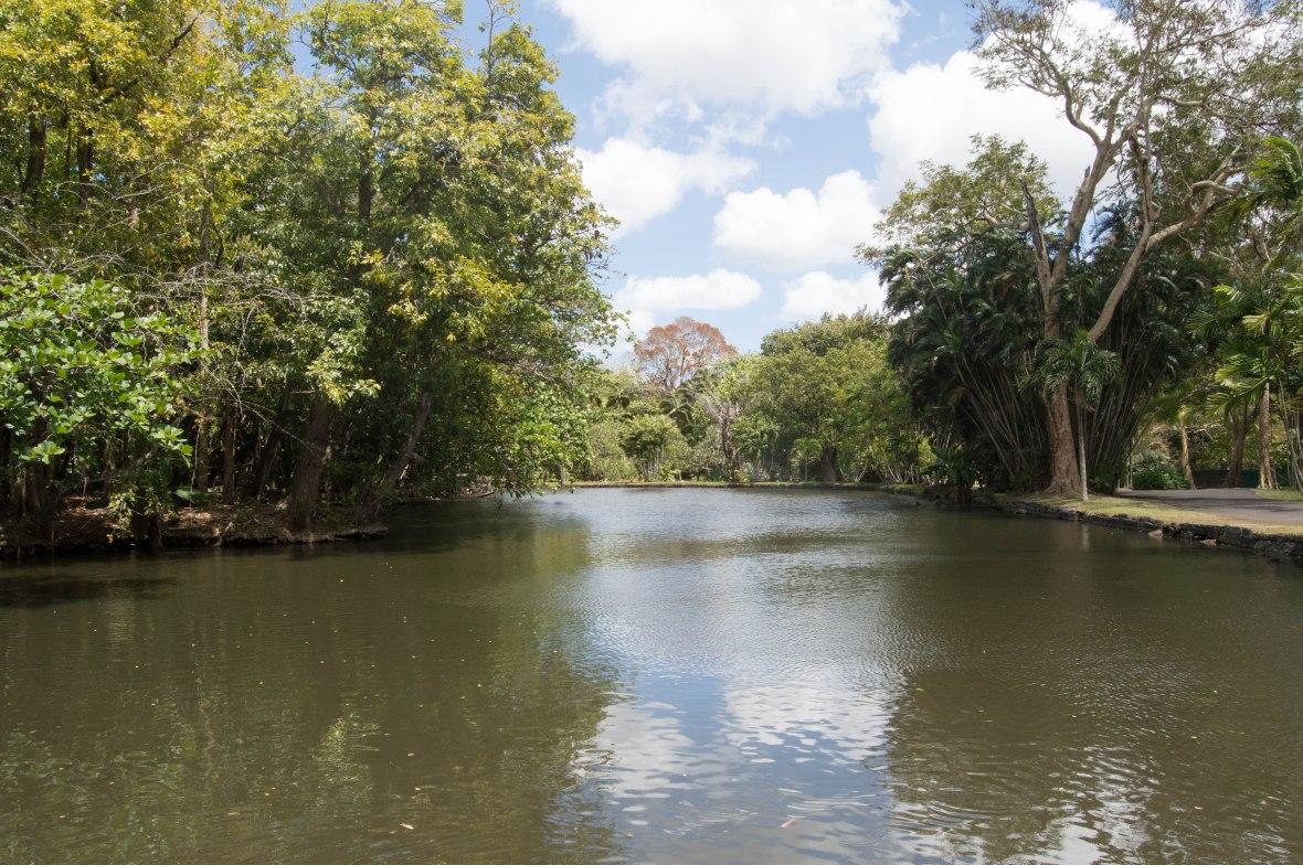 lake-sir-seewoosagur-ramgoolam-botanical-garden-mauritius