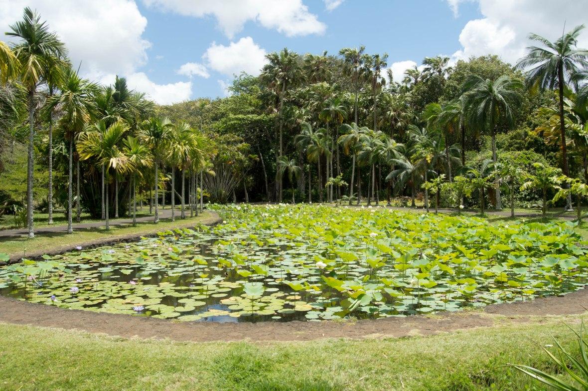 pond-sir-seewoosagur-ramgoolam-botanical-garden-mauritius