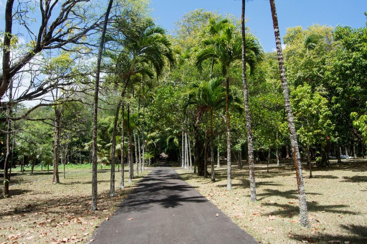 sir-seewoosagur-ramgoolam-botanical-garden-mauritius