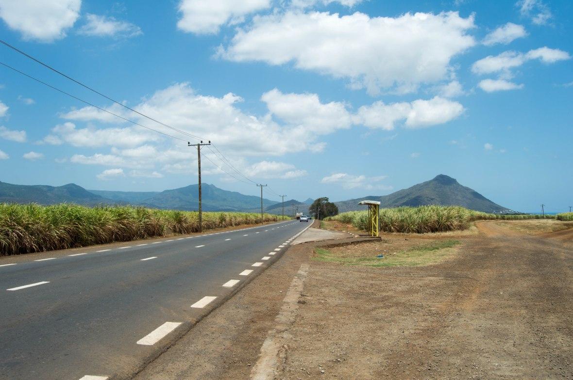 sugarcane-fields-mauritius