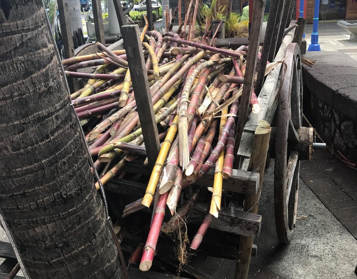 sugarcane-mauritius