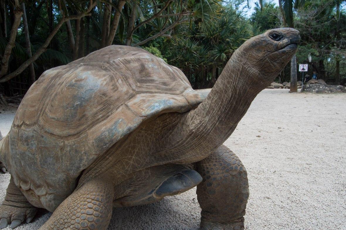 tortoise-la-vanille-nature-park-mauritius