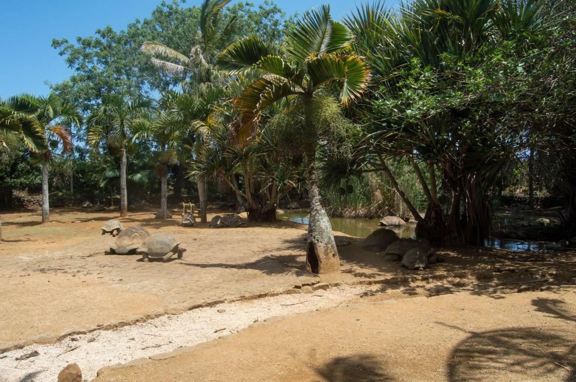 tortoises-la-vanille-nature-park-mauritius