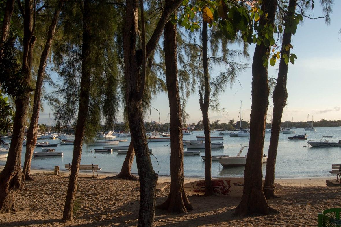 trees-grand-baie-beach-mauritius