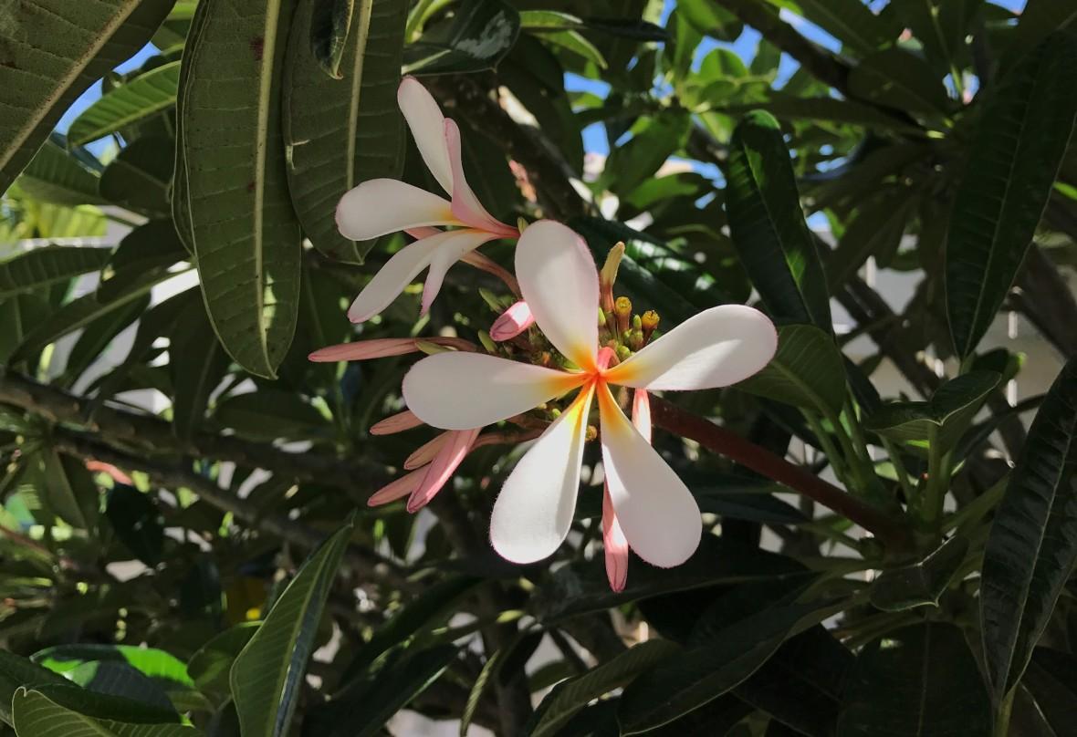 tropical-island-flowers-mauritius