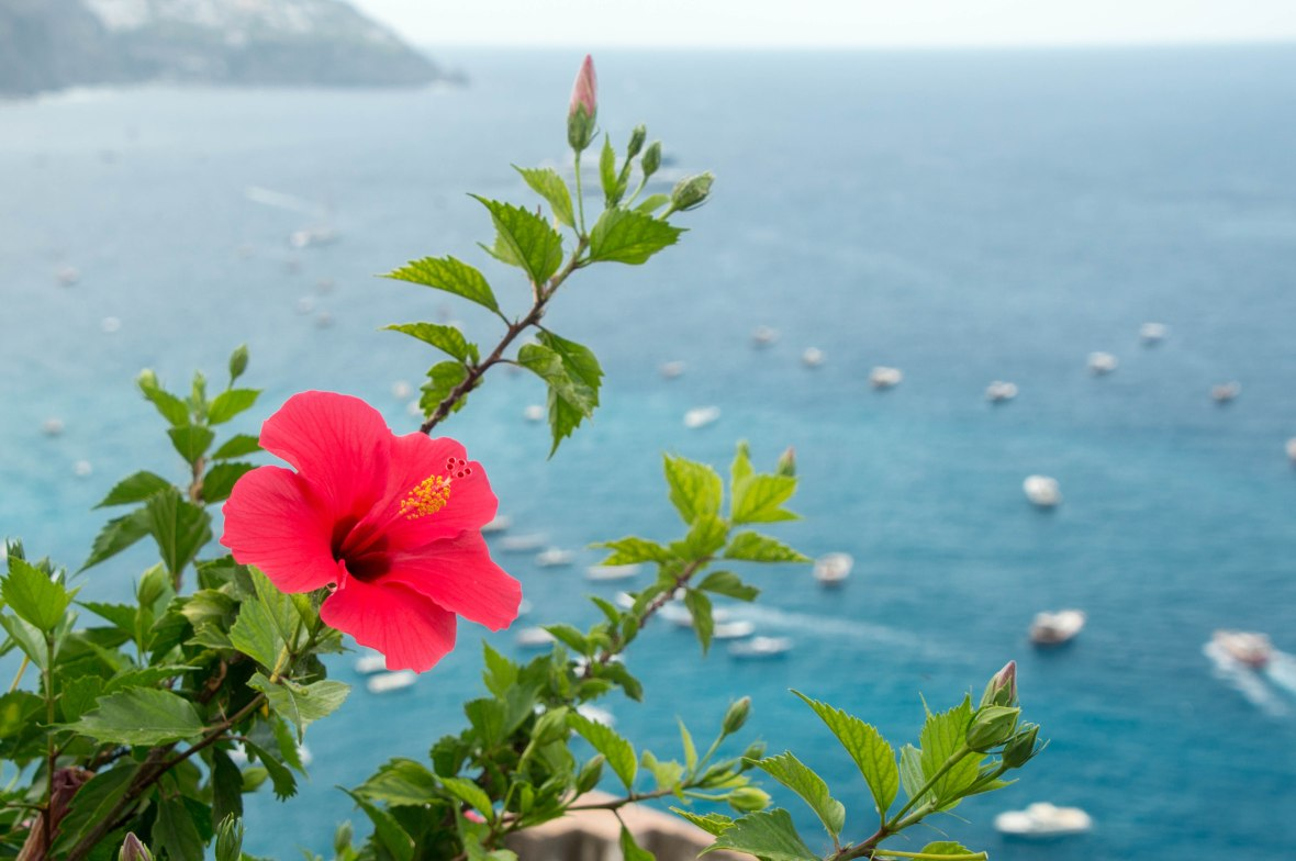 Red Flower, Positano, Italy