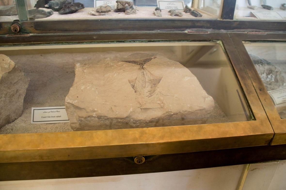 Fossils, Museum, Citadel, Amman, Jordan
