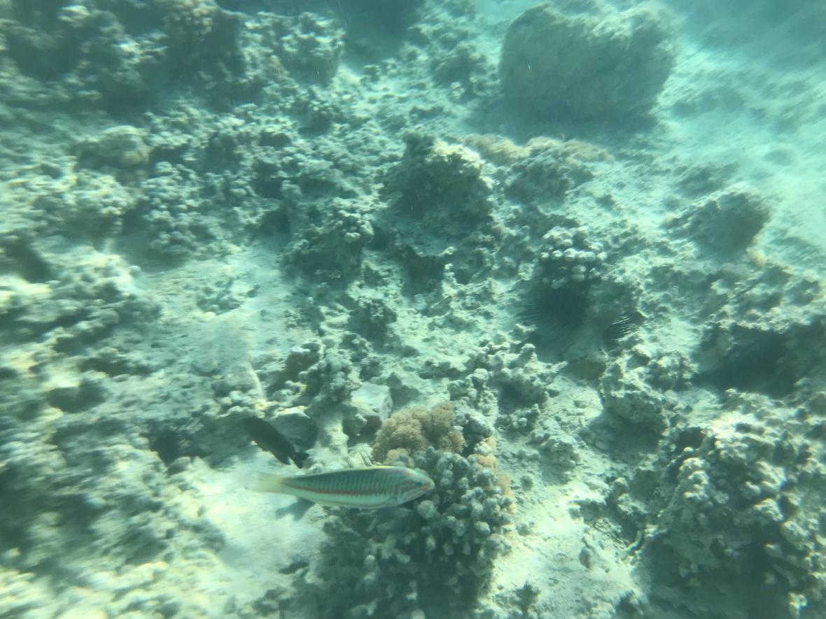 Fish, Snorkelling, Aqaba, Jordan
