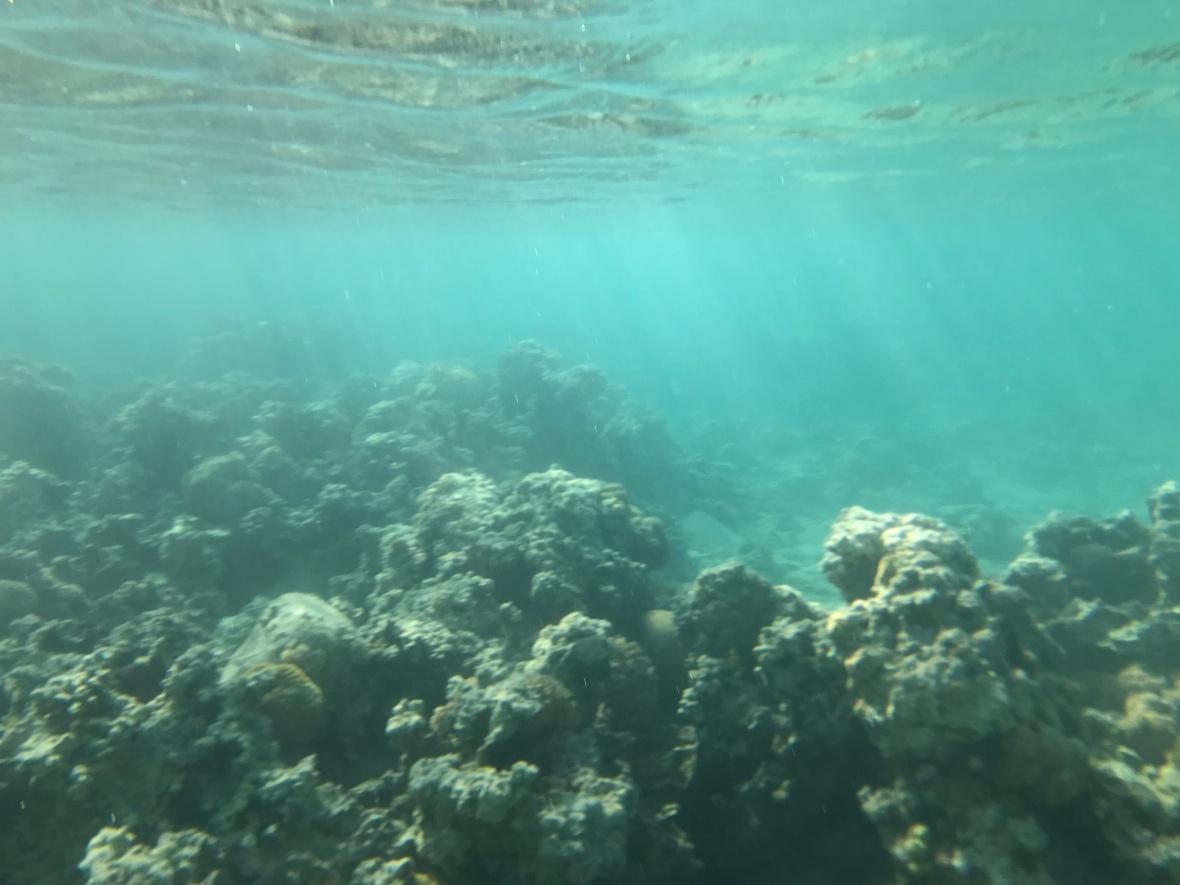 Snorkelling, Aqaba, Jordan