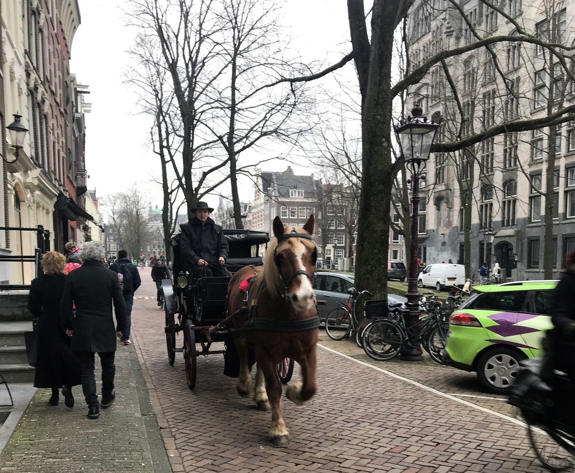 Horse And Carriage, Amsterdam, Netherlands