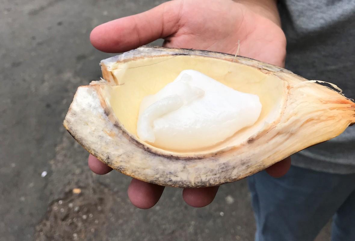 Coconut Pulp, Colombo, Sri Lanka