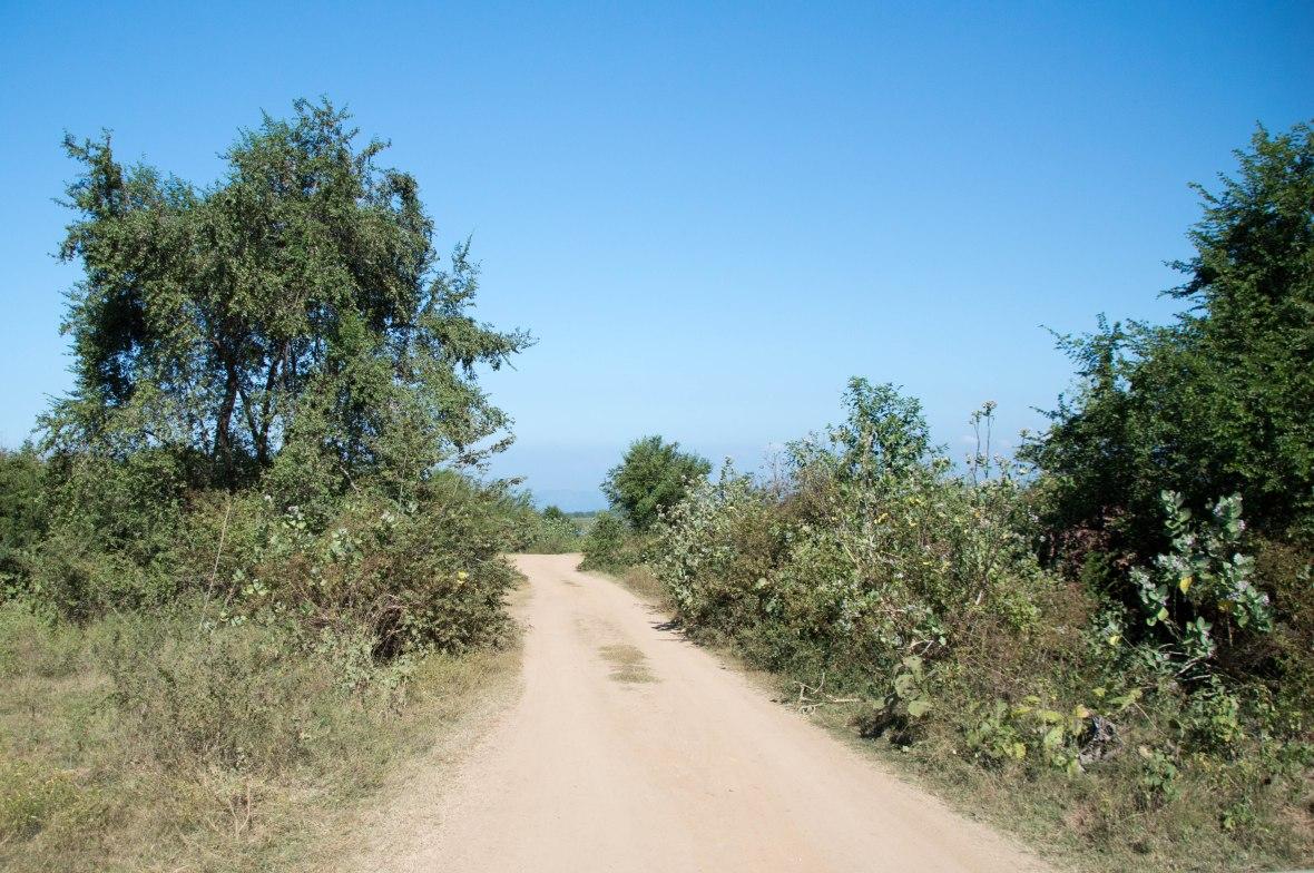 Driving Roads, Safari, Udawalawe, Sri Lanka