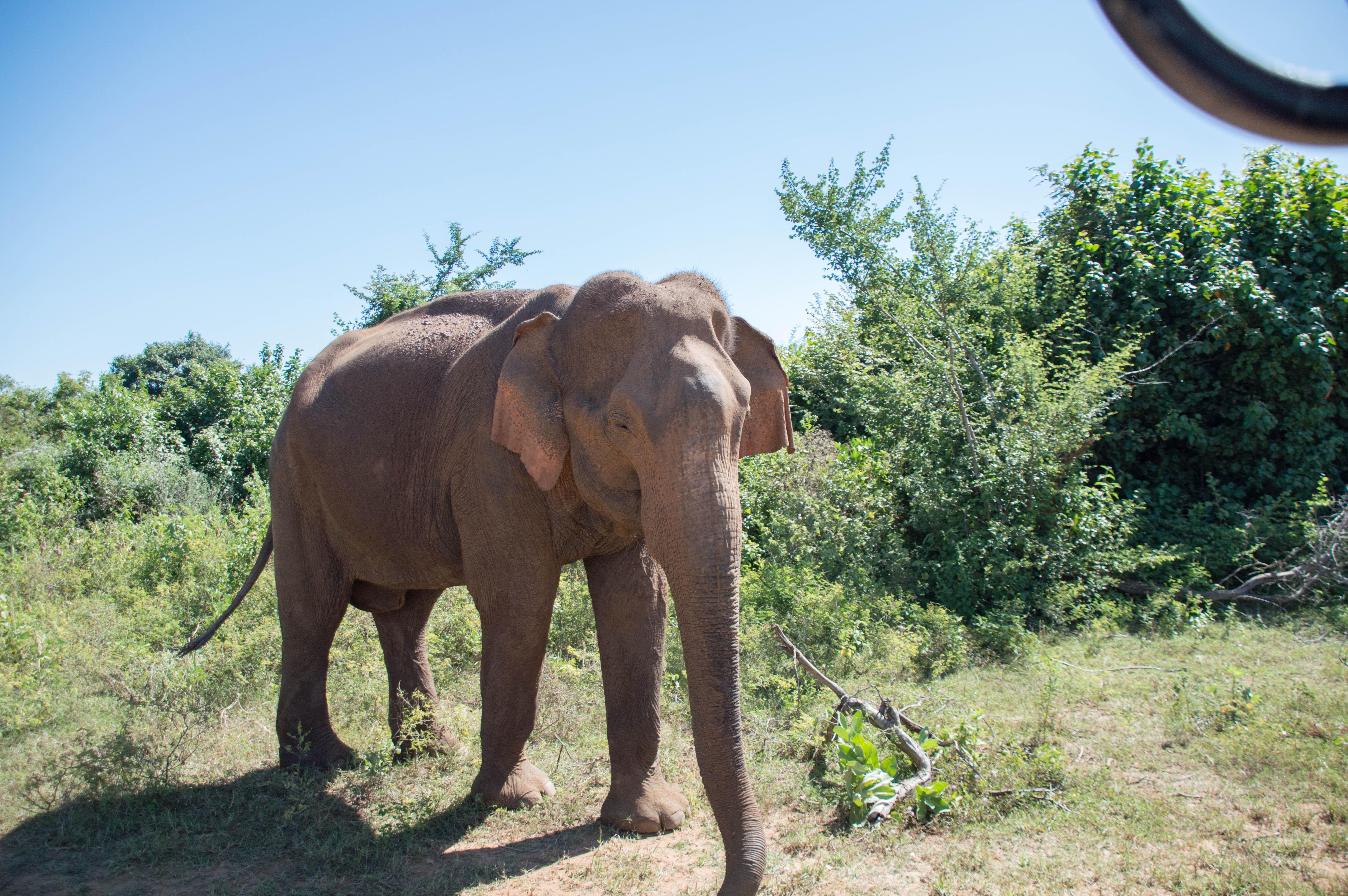 Elephant Safari, Udawalawe, Sri Lanka