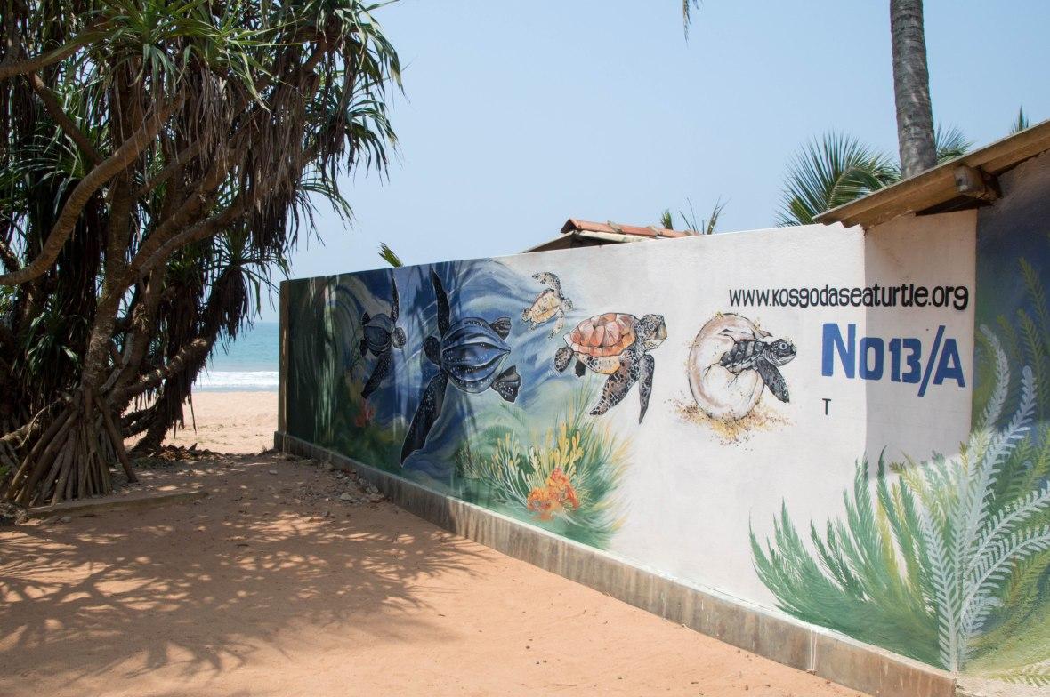 Kosgoda Sea Turtle Conservation Project, Sri Lanka