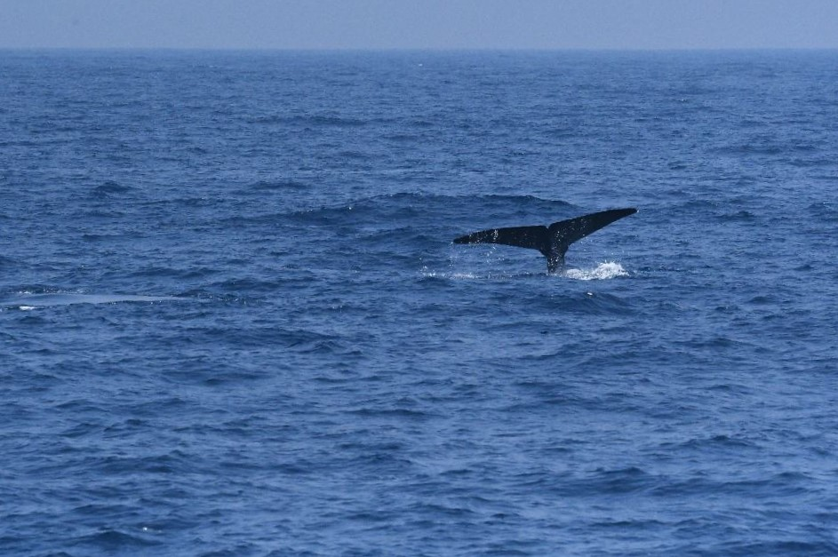 Whale Tail, Mirissa, Sri Lanka