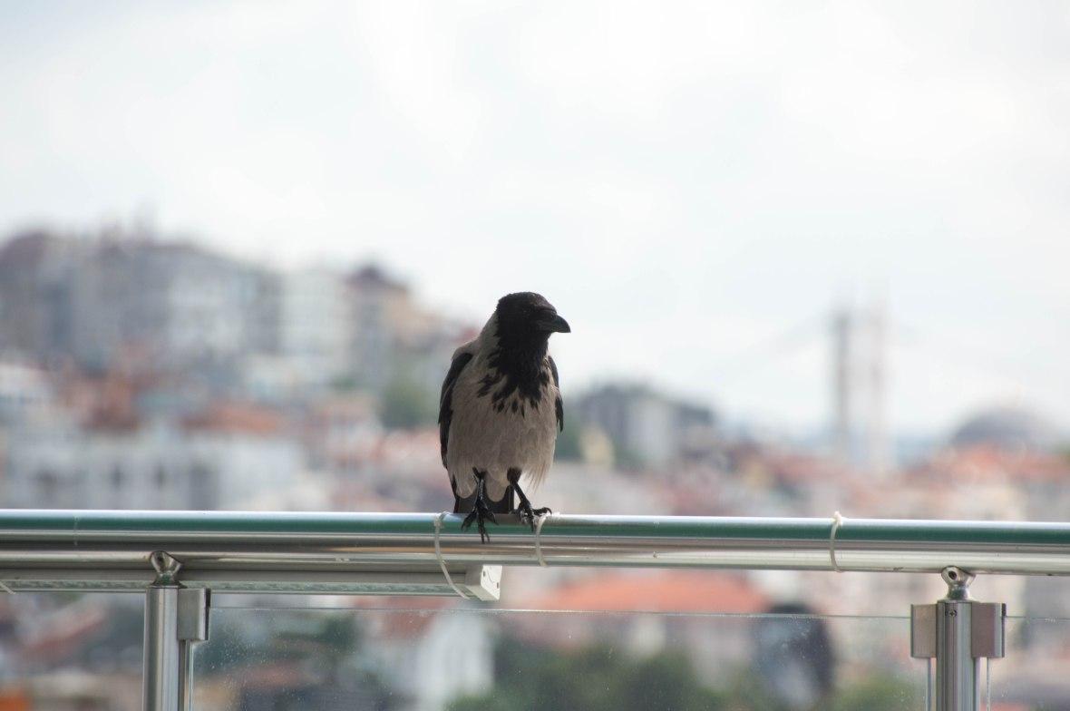 bird, konak cafe, galata, istanbul, turkey