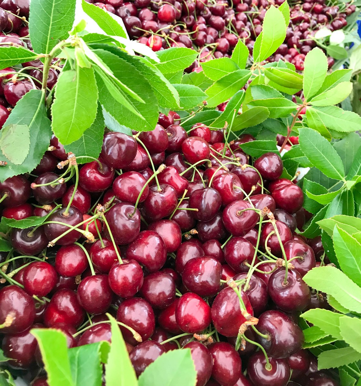 cherries, market, heybeliada island, adalar, princes islands, istanbul