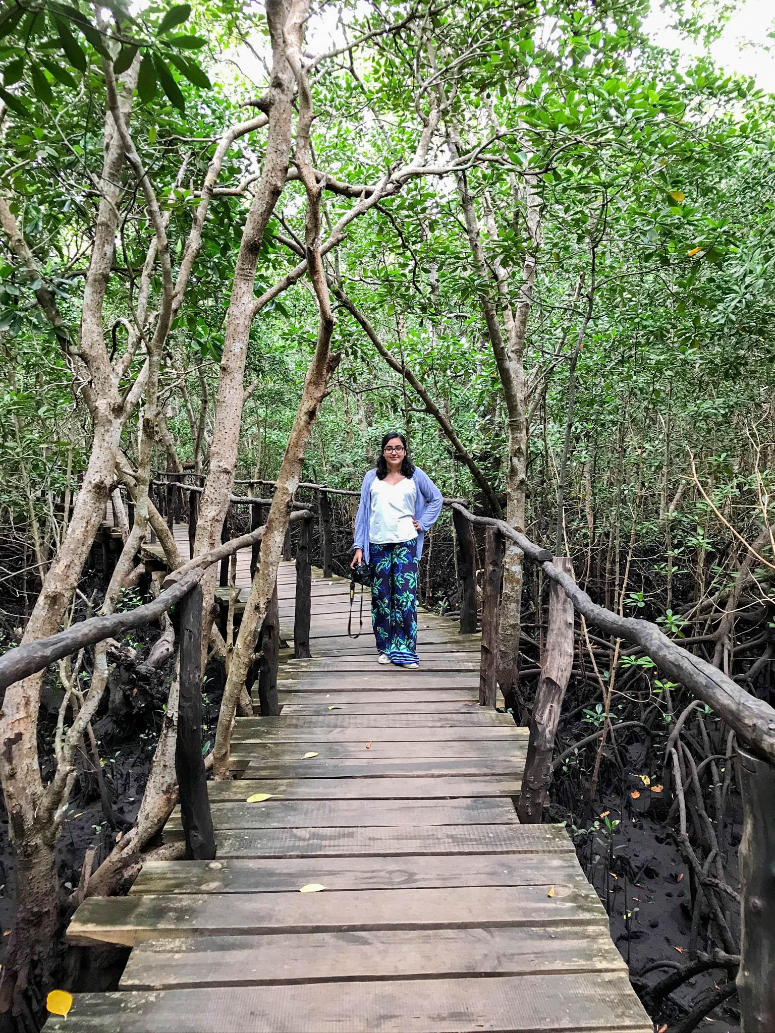 Exploring The Mangroves, Jozani Forest, Zanzibar, Tanzania